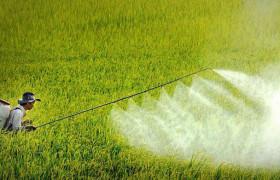 Bệnh nhiễm độc Hóa chất trừ sâu nghề nghiệp